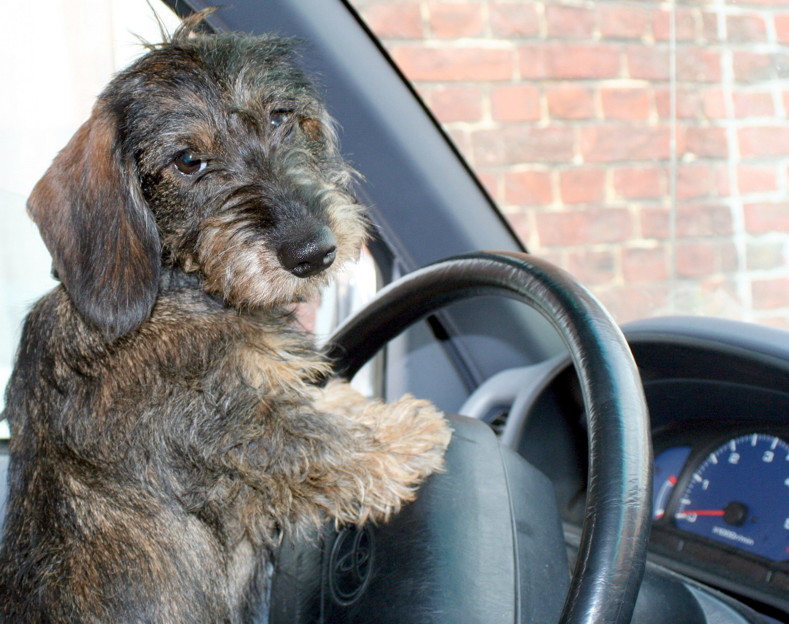 Travel With Dog In Car Potty Breaks