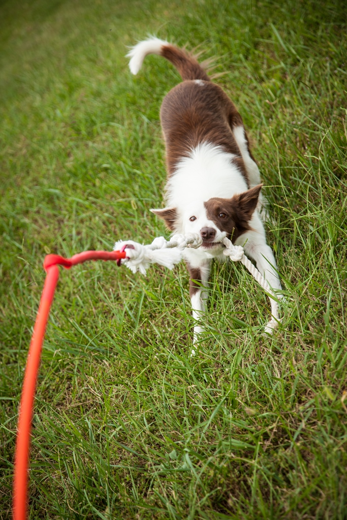tether tug keeps your pup entertained dog living