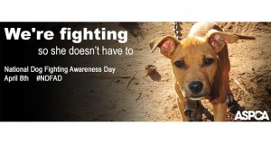 ASPCA Dog Fighting Awareness Slider
