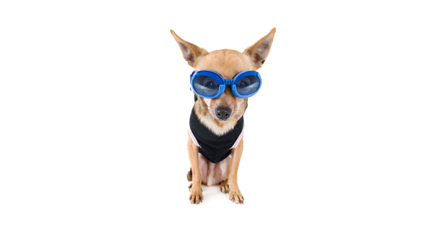 Dog with Goggles Slider