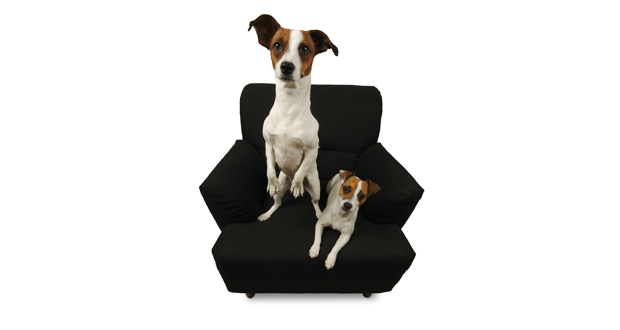 Two Dogs on Chair Slider