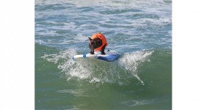 Surf Dog Competition 2015