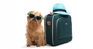 Travel Dog Slider