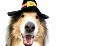 Collie in Halloween Costume