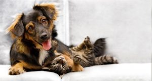 dog-and-cat-on-couch