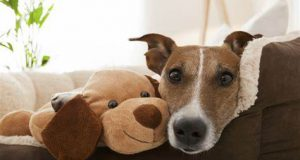 dog-with-teddy-bear