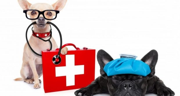 pet-first-aid