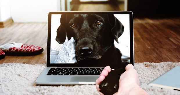 dog-on-computer-screen