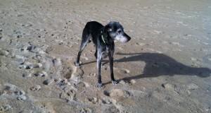 Ollie on Beach
