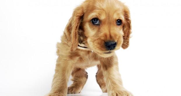 puppy training wait