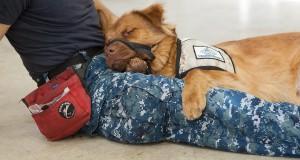 Canines for Service Slider