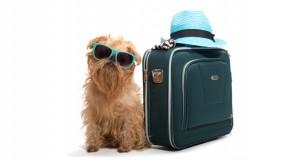 Travel Dog Slider