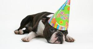 birthday_dog