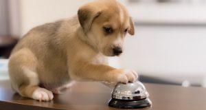 shadyside-inn-dogs-front-desk