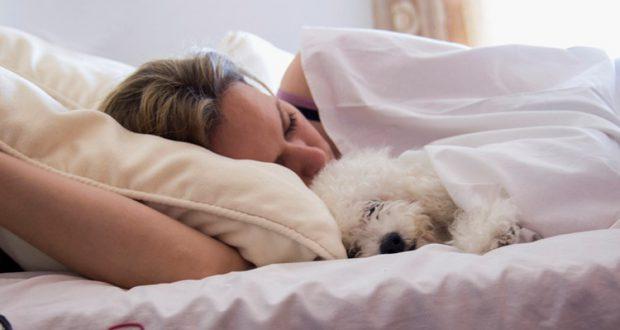 dog-sleeps-in-bed